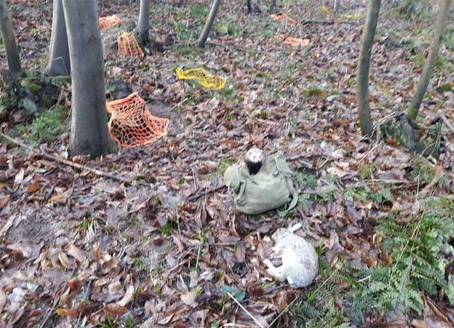 Animal Welfare at Olde English Pest Control - Pest Control Services, Ashford, Kent, Sussex, Essex