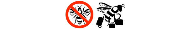 Humane honey bees removal service by Olde English Pest Control Kent.