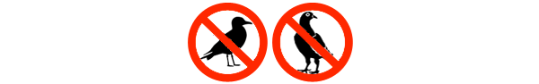 Pigeon and Gull Control in Kent, South East, Surrey, Sussex